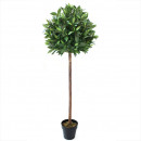 Laurel ball tree potted 150cm height, green